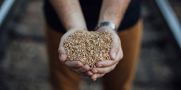 grainy-crop-sm
